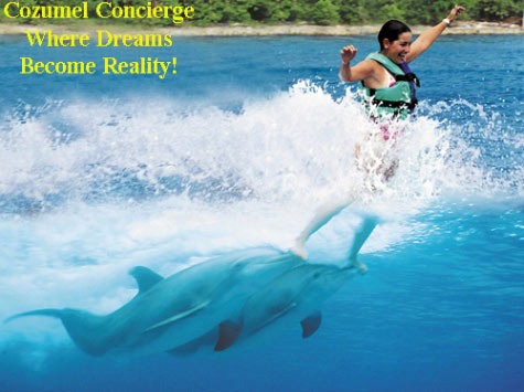 8c98c397940 Swim with Dolphins in Cozumel: by your personal Concierge.