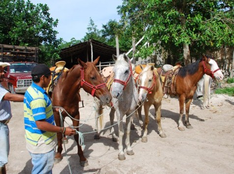 Cozumel Horseback Riding By Concierge